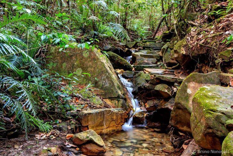 Trilha da Cachoeira do Rosario